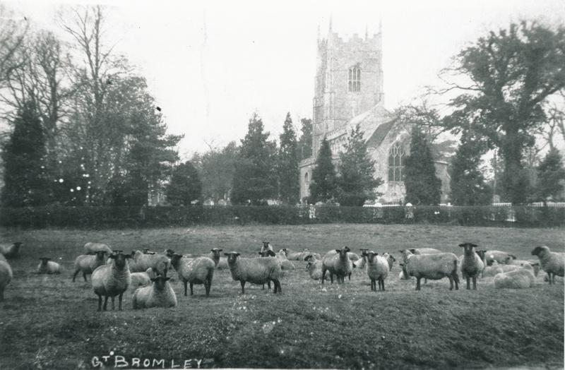 Church Sheep